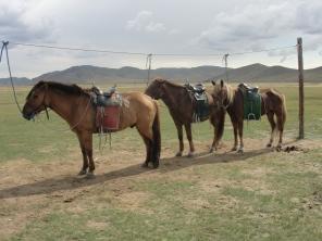 Our Mongolian Horses