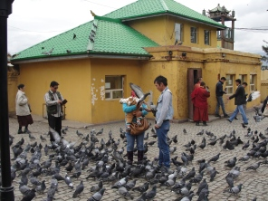 Pigeons everywhere!